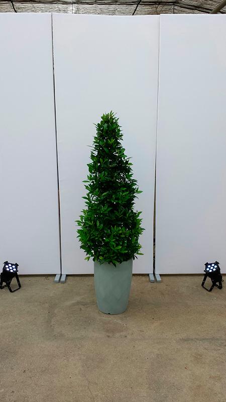 auswahl verschiedener mietpflanzen der dpl gl ser gmbh. Black Bedroom Furniture Sets. Home Design Ideas